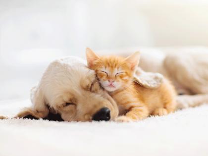 Haustierversicherung
