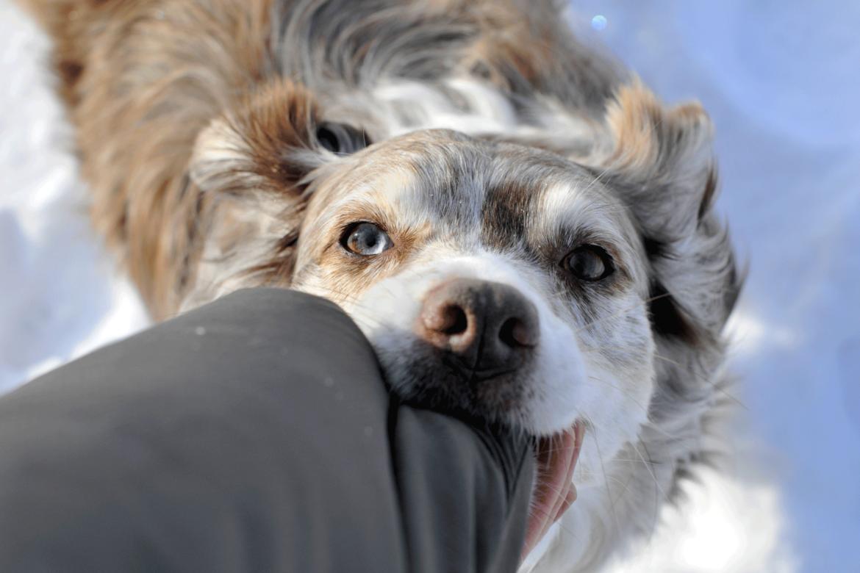 Bild Tierhaftpflichtversicherung